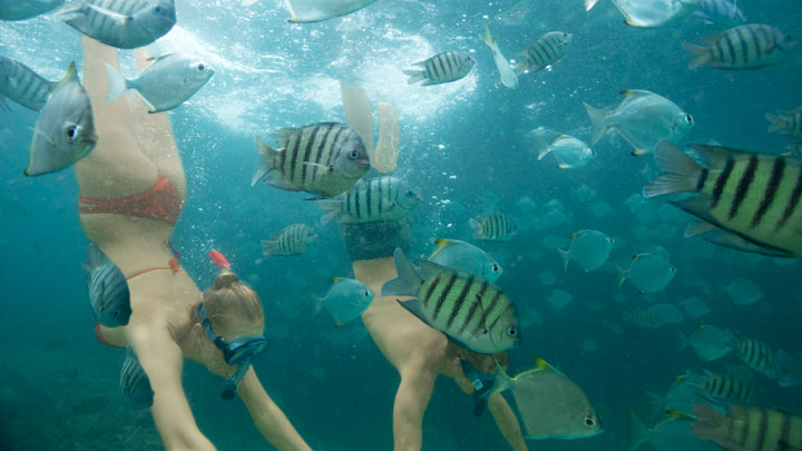 Couple snorkelling with fish